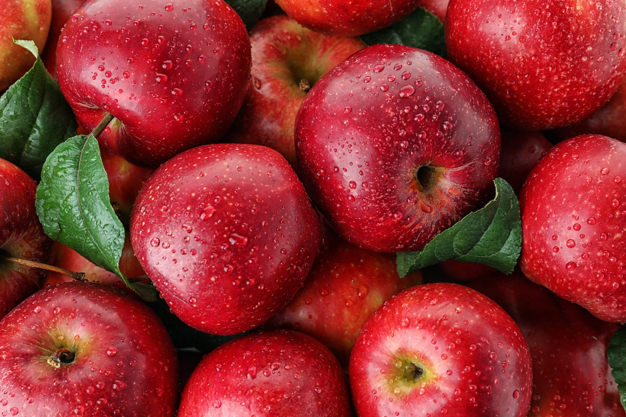 Many ripe juicy red apples covered with water drops as background